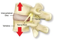 vertebral segment
